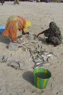 Fischmarkt in Mauretanien