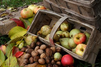 Herbstlicher Obstkorb mit Bioobst