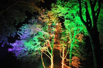 Magie der Nacht 2