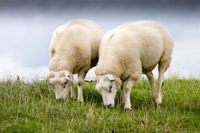 Wolllieferanten