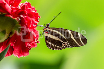 nicht selten - aber immerwieder schön: Schmetterling