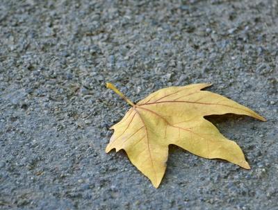 Herbstblatt...