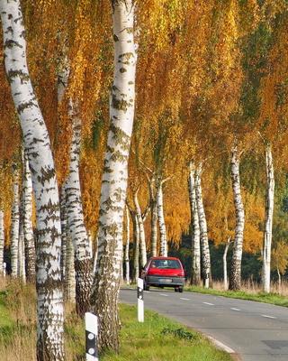 fahrt in den goldenen oktober