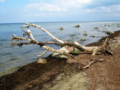 Insel Poel Schwarzer Busch Baum