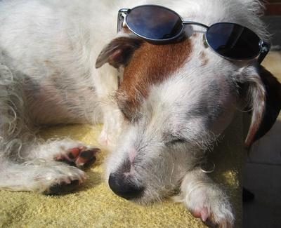 Mylo chillt in der Sonne