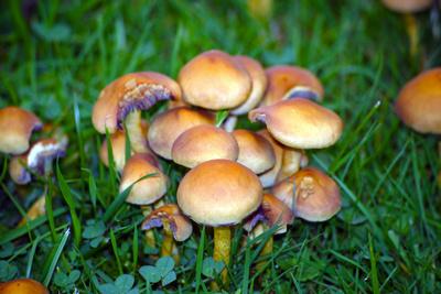 Pilze wohin man blickt