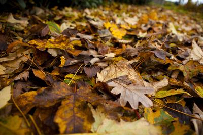 Herbstlaubteppich