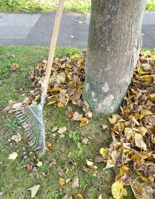 Herbstarbeit