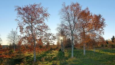 Waldgrenze