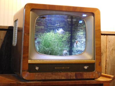 Aquarium im Fernseher
