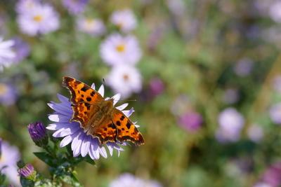 der letzte Schmetterling...