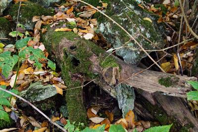 Waldsterben I