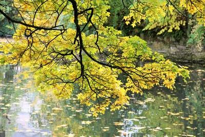 Herbstidylle unter dem Baum
