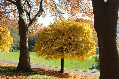 Herbstspaziergang im Kurpark Oberlaa 02