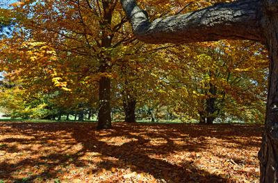 Herbstspaziergang im Kurpark Oberlaa 03