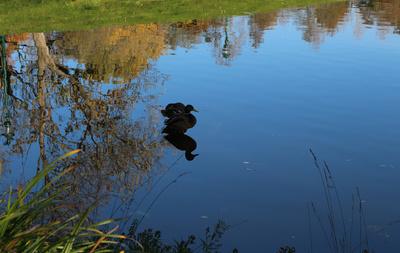 Herbstspaziergang im Kurpark Oberlaa 07