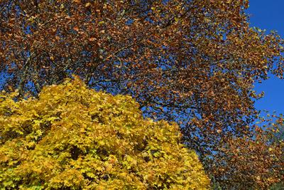 Herbst.Kontraste