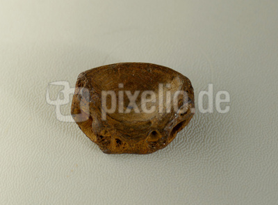 Fossiler Haiwirbel