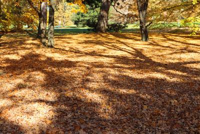 Herbst.Teppich