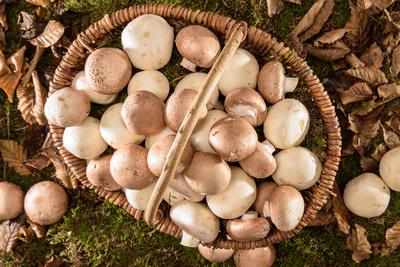 Korb mit frischen Pilzen auf dem Waldboden