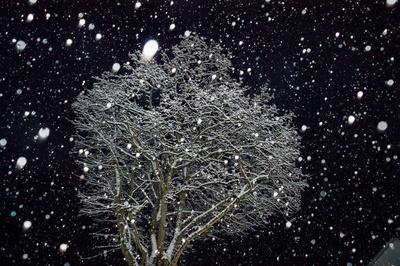 Winterpracht über Nacht