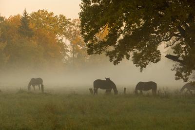 Morgens auf der Weide (1)