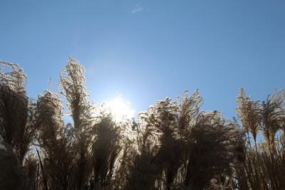 Herbstgräser 01