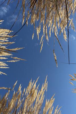 Herbstgräser 02