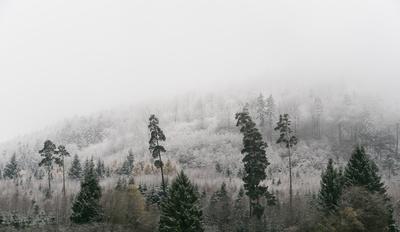 Bergwald im Winterkleid