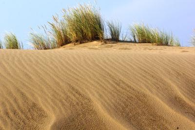 Dünengräser 1