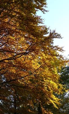 Herbst Stimmung