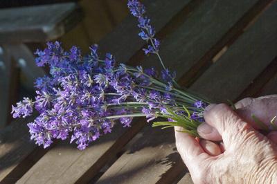 Lavendel aus dem Garten