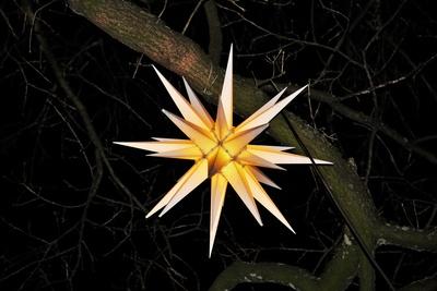 Herrnhuter Stern leuchtet (vom Baum herab)