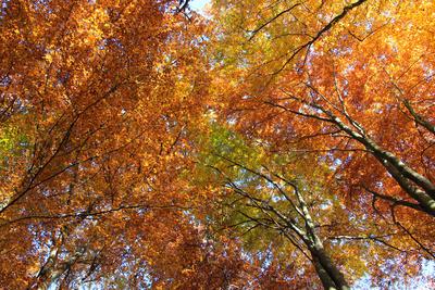 Herbstwipfel