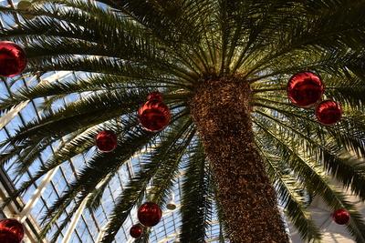 weihnachtsdeko an palmen