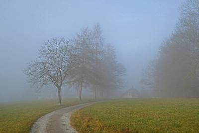Eine Nebelwanderung / 1
