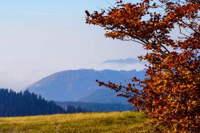 Herbstlicher Schwarzwald