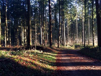 Waldweg am Morgen