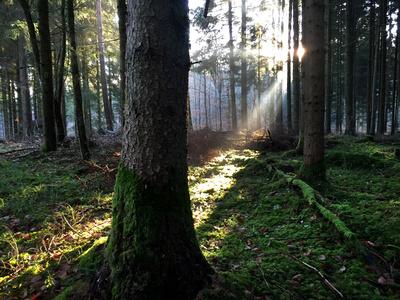 Morgenstrahlen im Wald_quer