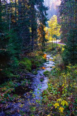 Bunter Schwarzwald-Herbst mit Bach