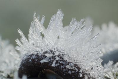 Frostmorgenzaun