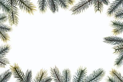 Kostenloses Foto: Rahmen aus Tanne - pixelio.de