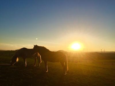 Zwei Pferde