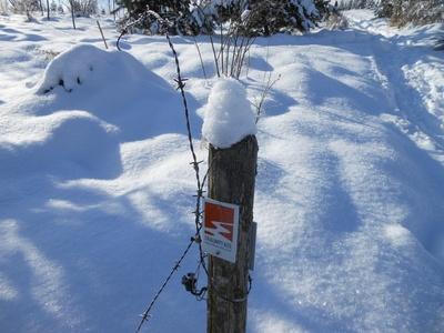 Schnee ist weicher als Stacheldraht
