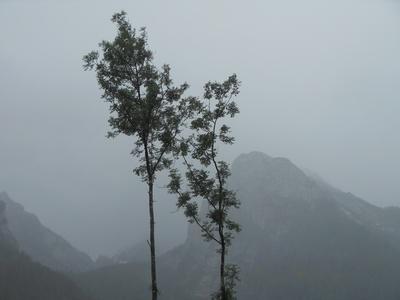 Nebel im Zauberwald