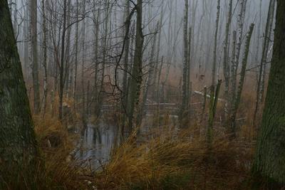 Nebel im Moor - filmreifes Set