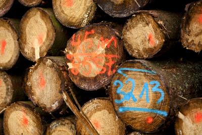 Holzeinschlag 1