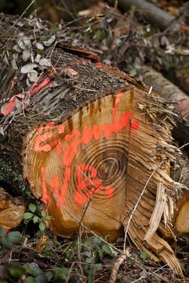 Holzeinschlag 3