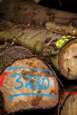 Holzeinschlag 4