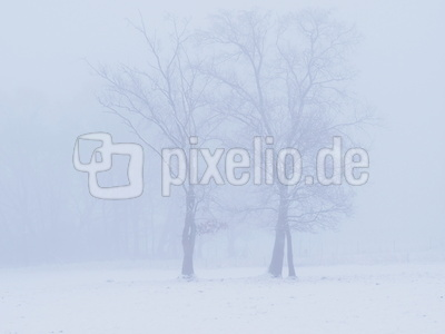 nebel in den feldern  9